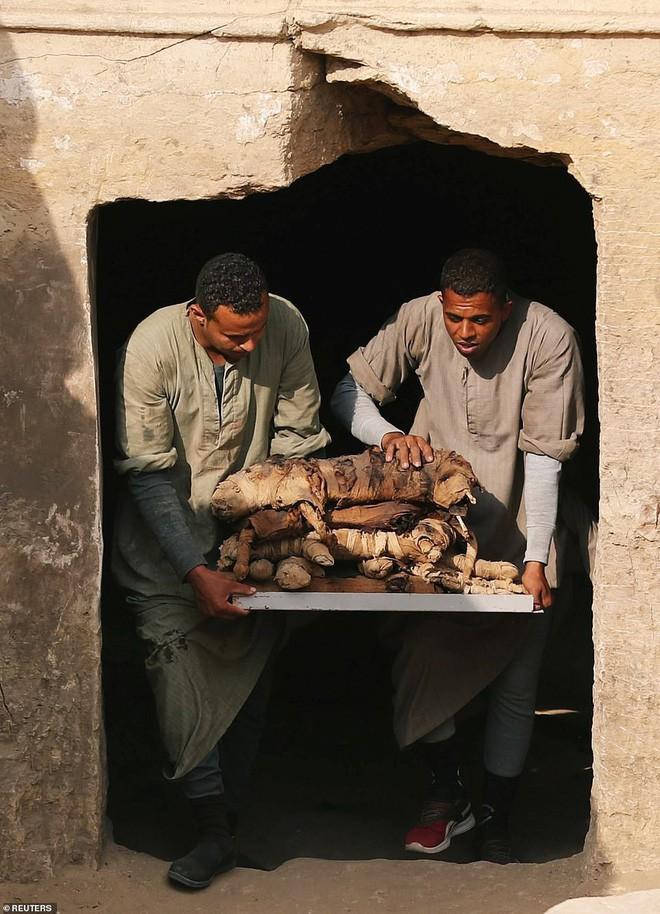 Xác ướp bọ hung và mèo được tìm thấy bên trong ngôi mộ Ai Cập cổ.5