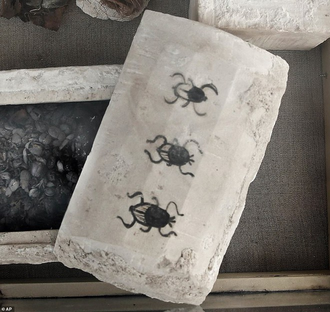 Xác ướp bọ hung và mèo được tìm thấy bên trong ngôi mộ Ai Cập cổ.8