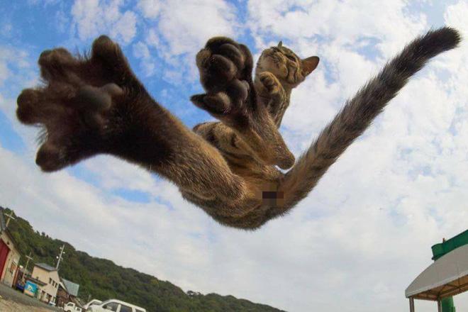 Chùm ảnh: Khi lũ boss mèo chăm chỉ luyện tập võ công, chờ đến ngày đi chiếm lấy thế giới - Ảnh 14.