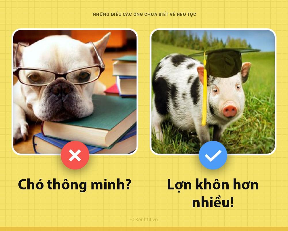 Xin chào! Tôi là một con lợn và các ông chưa biết tôi có thể hay ho đến thế nào đâu - Ảnh 2.