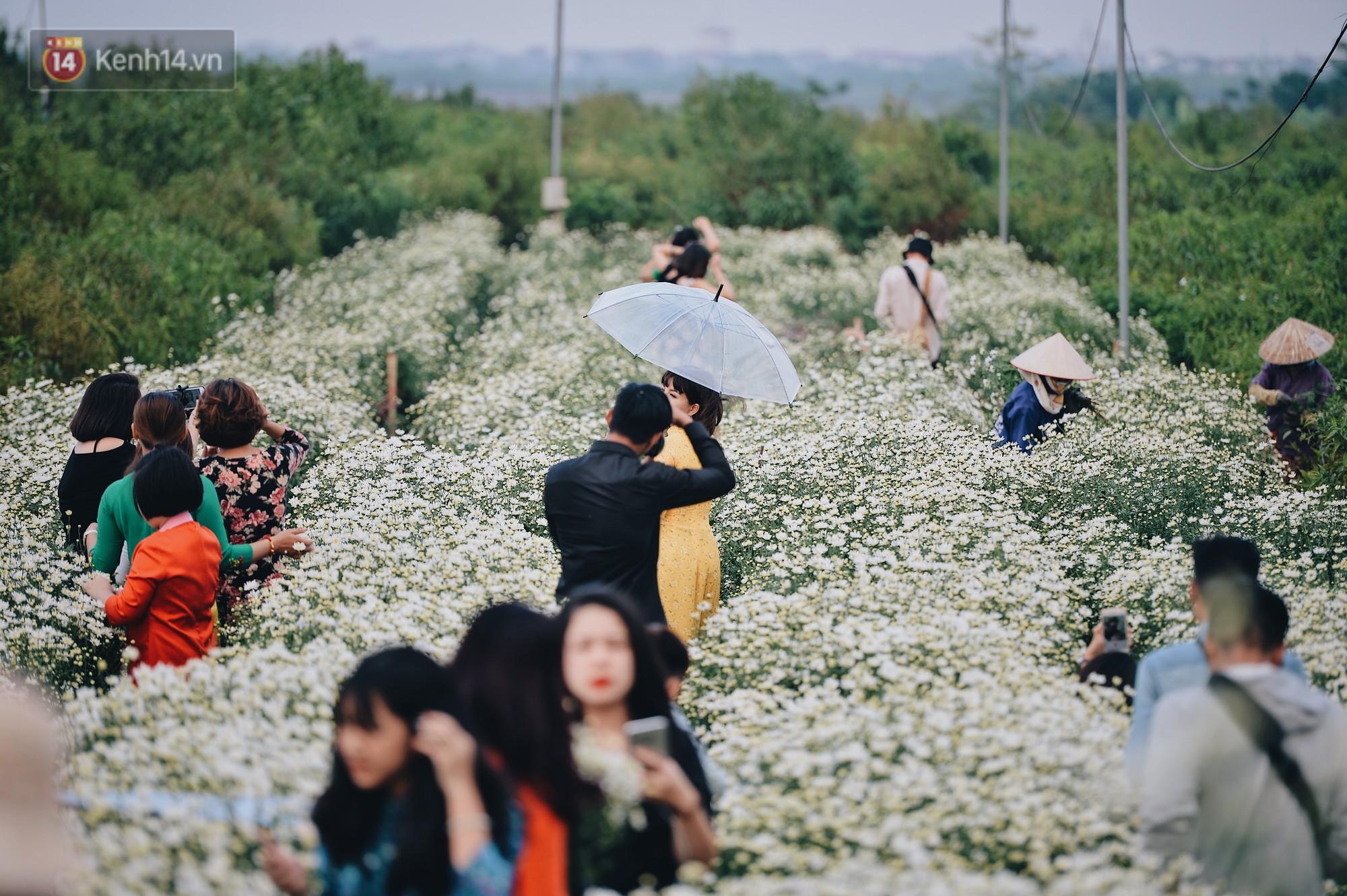 Vườn cúc hoạ mi ở Hà Nội thất thủ cuối tuần: 1 mét vuông có chục nhiếp ảnh gia và mẫu - Ảnh 1.