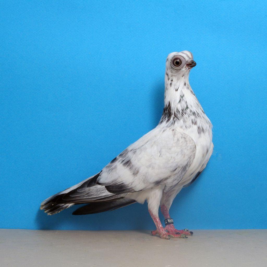 10 con vật có ngoại hình kỳ dị mà chẳng mấy khi bạn nhìn thấy trên internet - Ảnh 2.