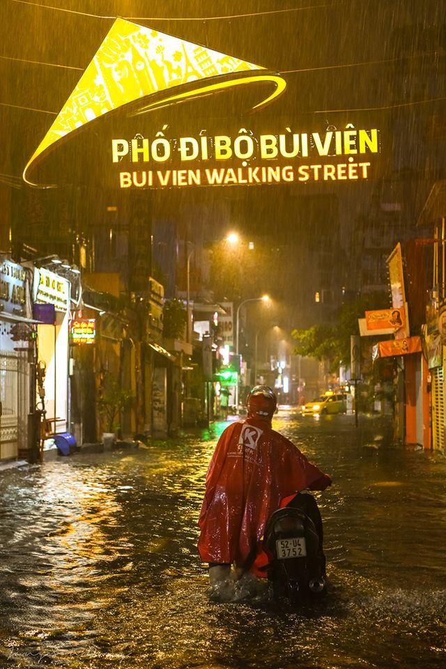 Sài Gòn sau bão số 9: Phố đi bộ thành phố bơi lội, nhà dân hoá bể sinh vật cảnh với đủ loại cá, gián và rắn rết - Ảnh 1.