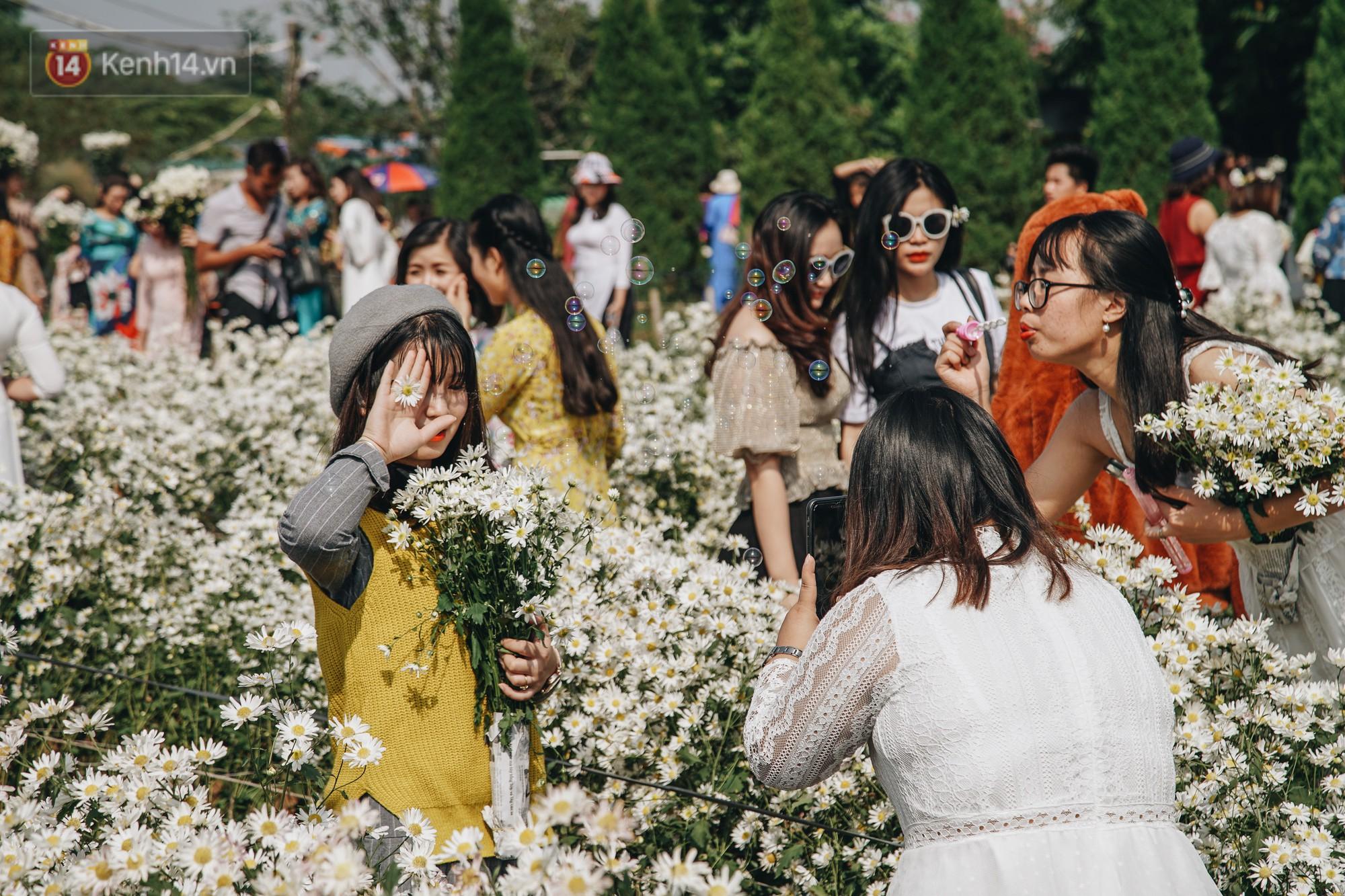 Vườn cúc họa mi ở Hà Nội tiếp tục thất thủ: Đường vào tắc nghẽn, chụp một bức ảnh phải né bao nhiêu người - Ảnh 12.