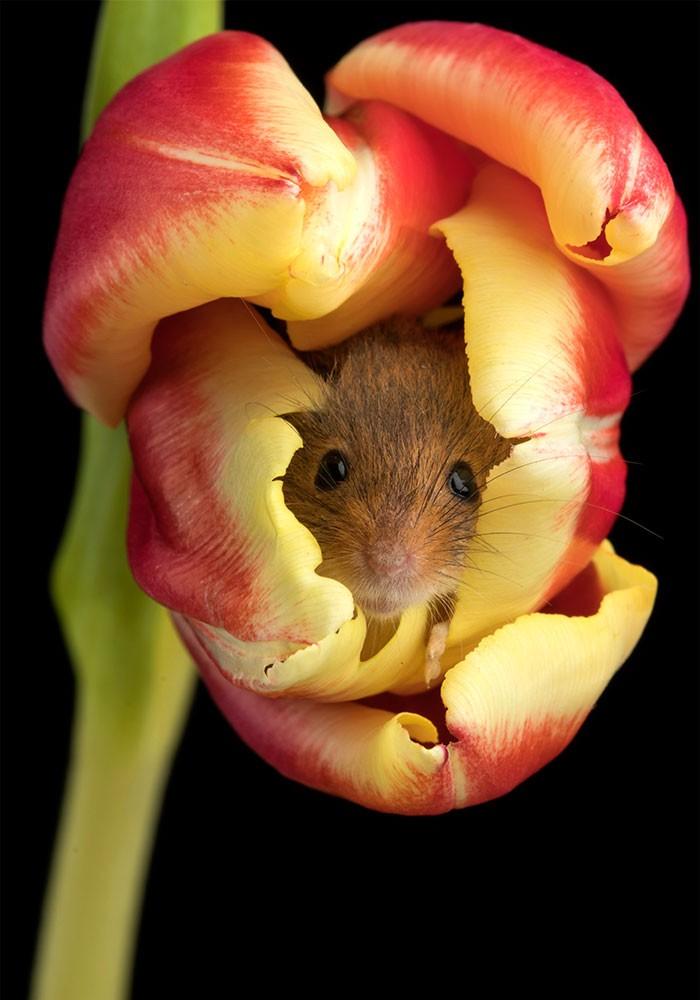 Bộ ảnh lũ chuột đồng thu hoạch phấn hoa chắc chắn sẽ khiến ngày mới của bạn thêm phần tươi tắn - Ảnh 2.