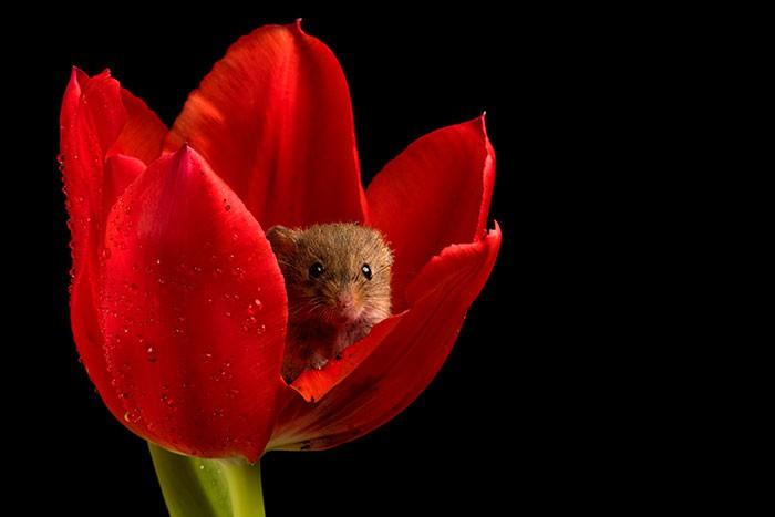 Bộ ảnh lũ chuột đồng thu hoạch phấn hoa chắc chắn sẽ khiến ngày mới của bạn thêm phần tươi tắn - Ảnh 3.