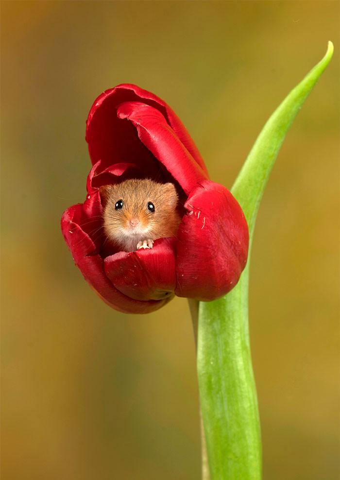 Bộ ảnh lũ chuột đồng thu hoạch phấn hoa chắc chắn sẽ khiến ngày mới của bạn thêm phần tươi tắn - Ảnh 4.