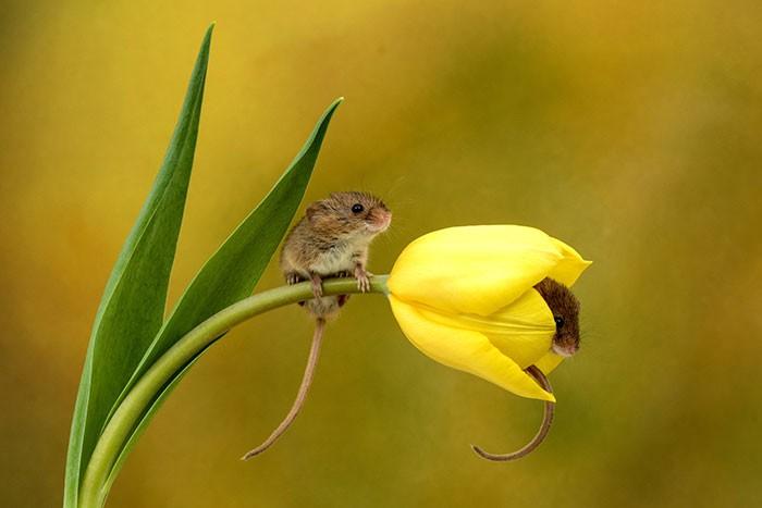 Bộ ảnh lũ chuột đồng thu hoạch phấn hoa chắc chắn sẽ khiến ngày mới của bạn thêm phần tươi tắn - Ảnh 5.