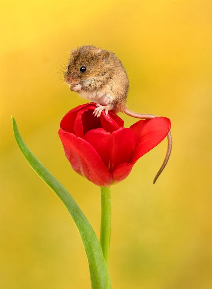 Bộ ảnh lũ chuột đồng thu hoạch phấn hoa chắc chắn sẽ khiến ngày mới của bạn thêm phần tươi tắn - Ảnh 6.