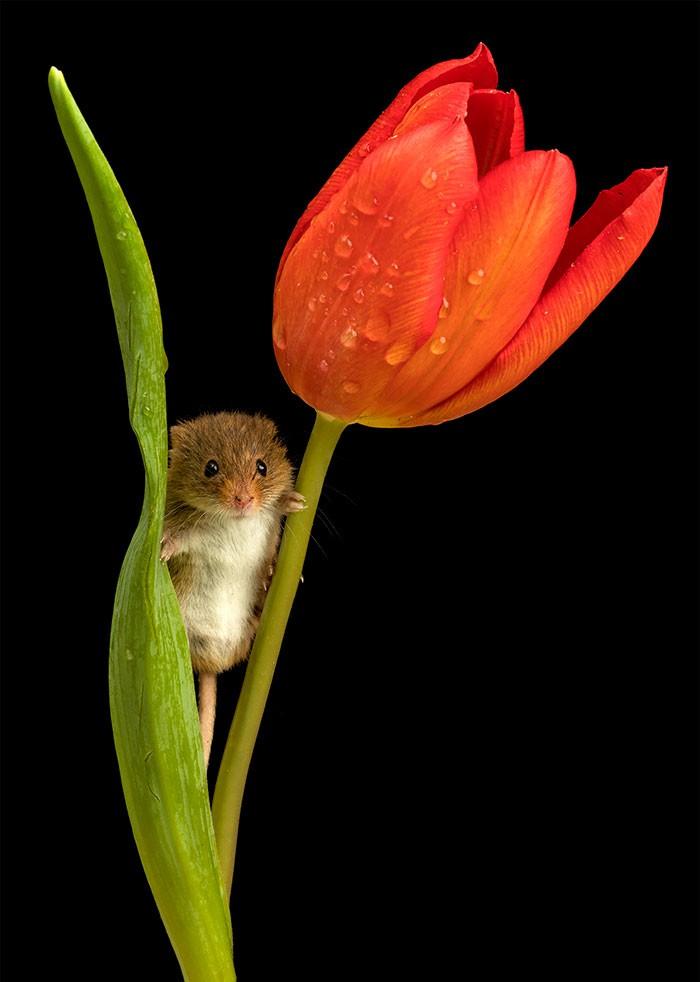 Bộ ảnh lũ chuột đồng thu hoạch phấn hoa chắc chắn sẽ khiến ngày mới của bạn thêm phần tươi tắn - Ảnh 7.