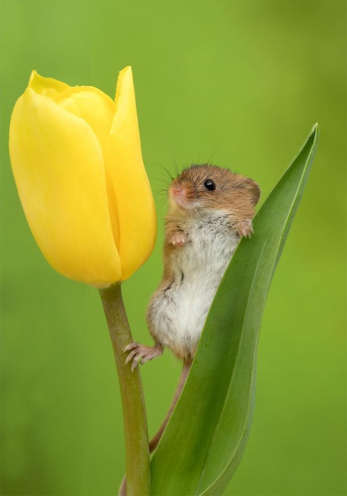 Bộ ảnh lũ chuột đồng thu hoạch phấn hoa chắc chắn sẽ khiến ngày mới của bạn thêm phần tươi tắn - Ảnh 8.