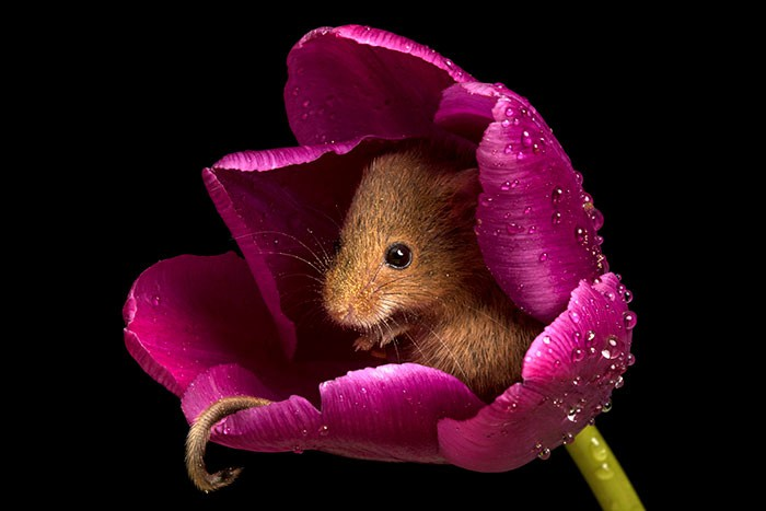 Bộ ảnh lũ chuột đồng thu hoạch phấn hoa chắc chắn sẽ khiến ngày mới của bạn thêm phần tươi tắn - Ảnh 9.