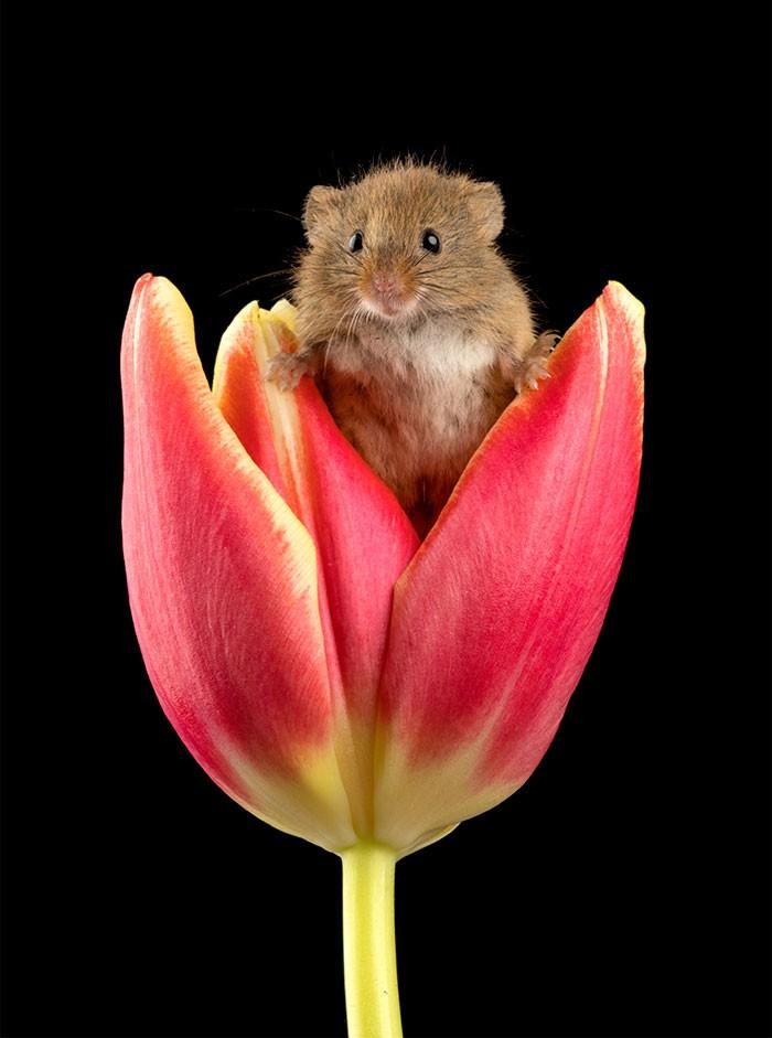 Bộ ảnh lũ chuột đồng thu hoạch phấn hoa chắc chắn sẽ khiến ngày mới của bạn thêm phần tươi tắn - Ảnh 12.