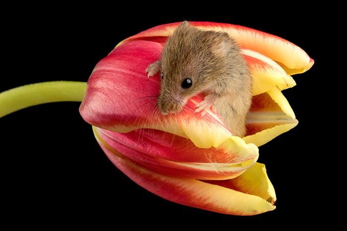 Bộ ảnh lũ chuột đồng thu hoạch phấn hoa chắc chắn sẽ khiến ngày mới của bạn thêm phần tươi tắn - Ảnh 14.