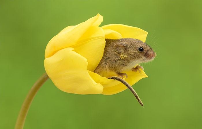 Bộ ảnh lũ chuột đồng thu hoạch phấn hoa chắc chắn sẽ khiến ngày mới của bạn thêm phần tươi tắn - Ảnh 15.