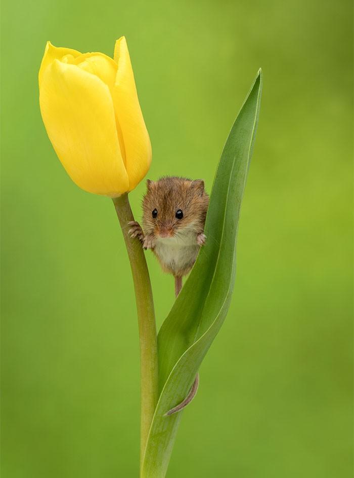Bộ ảnh lũ chuột đồng thu hoạch phấn hoa chắc chắn sẽ khiến ngày mới của bạn thêm phần tươi tắn - Ảnh 16.