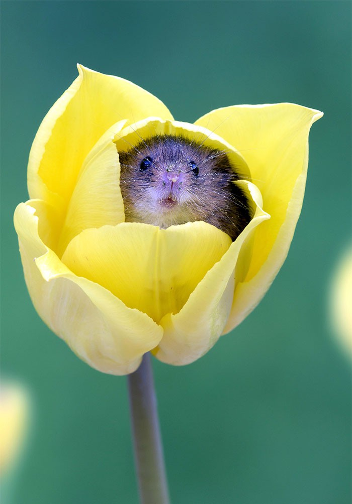 Bộ ảnh lũ chuột đồng thu hoạch phấn hoa chắc chắn sẽ khiến ngày mới của bạn thêm phần tươi tắn - Ảnh 18.
