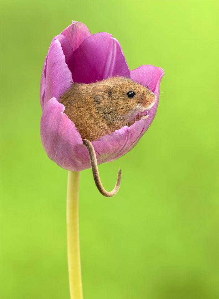 Bộ ảnh lũ chuột đồng thu hoạch phấn hoa chắc chắn sẽ khiến ngày mới của bạn thêm phần tươi tắn - Ảnh 10.