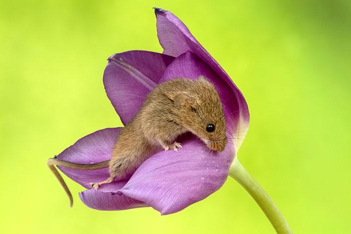 Bộ ảnh lũ chuột đồng thu hoạch phấn hoa chắc chắn sẽ khiến ngày mới của bạn thêm phần tươi tắn - Ảnh 11.