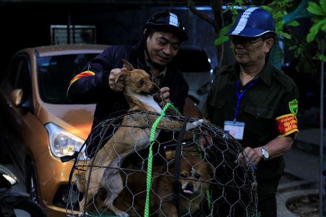 Tờ mờ sáng, theo chân đội bắt chó thả rông ở Hà Nội - Ảnh 10.