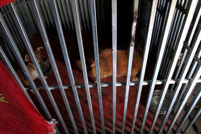 Tờ mờ sáng, theo chân đội bắt chó thả rông ở Hà Nội - Ảnh 11.