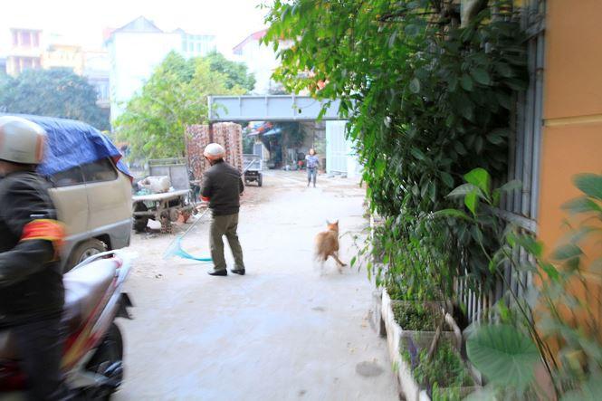 Tờ mờ sáng, theo chân đội bắt chó thả rông ở Hà Nội - Ảnh 12.