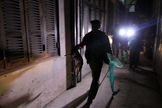 Tờ mờ sáng, theo chân đội bắt chó thả rông ở Hà Nội - Ảnh 6.