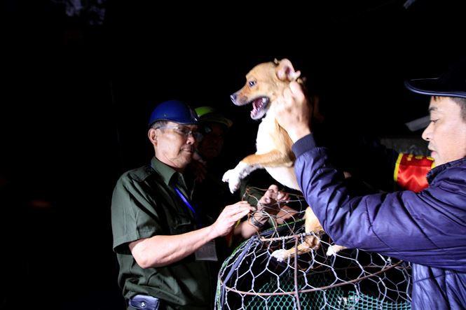 Tờ mờ sáng, theo chân đội bắt chó thả rông ở Hà Nội - Ảnh 7.