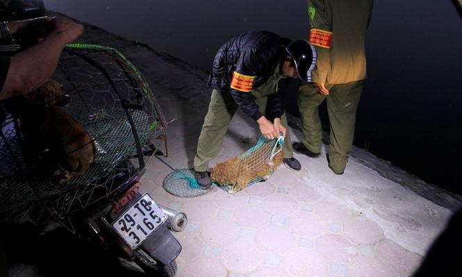 Tờ mờ sáng, theo chân đội bắt chó thả rông ở Hà Nội - Ảnh 8.
