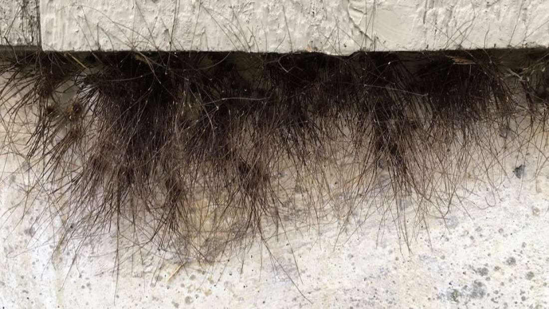 Bức tường của tòa nhà tự nhiên mọc lông và biết được sự thật đằng sau thì ai cũng phải rùng mình sợ hãi - Ảnh 1.