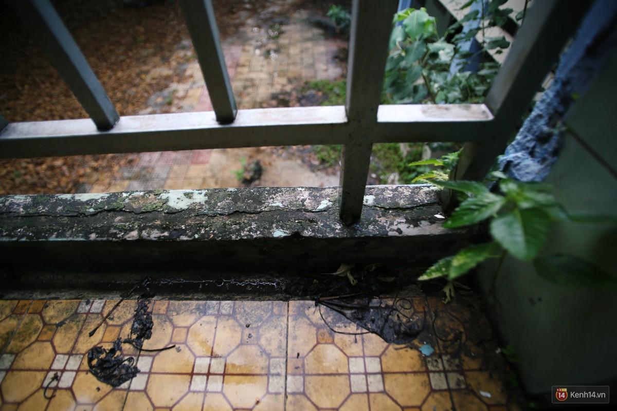Cảnh hoang tàn bên trong ngôi trường tiểu học bị bỏ hoang hơn 3 năm ở Sài Gòn - Ảnh 8.