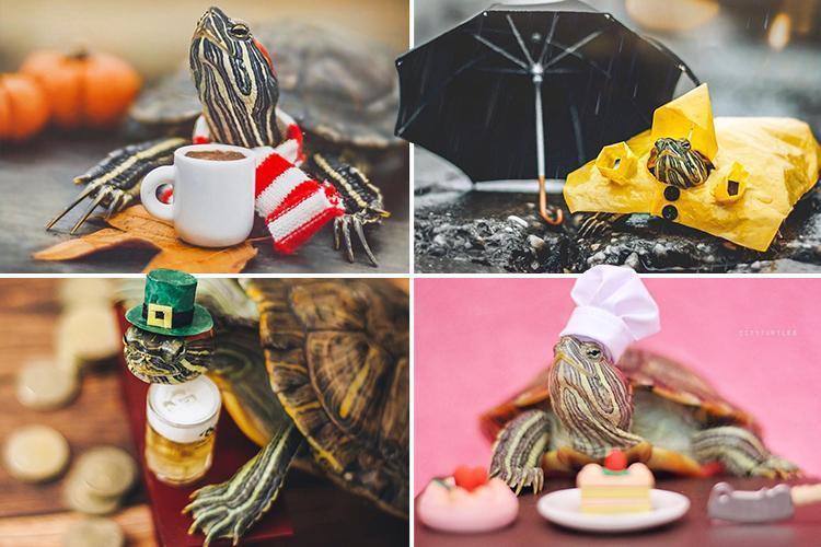 Cuộc sống sang chảnh của 2 chú rùa tai đỏ đang chiếm trọn trái tim người dùng Instagram - Ảnh 4.