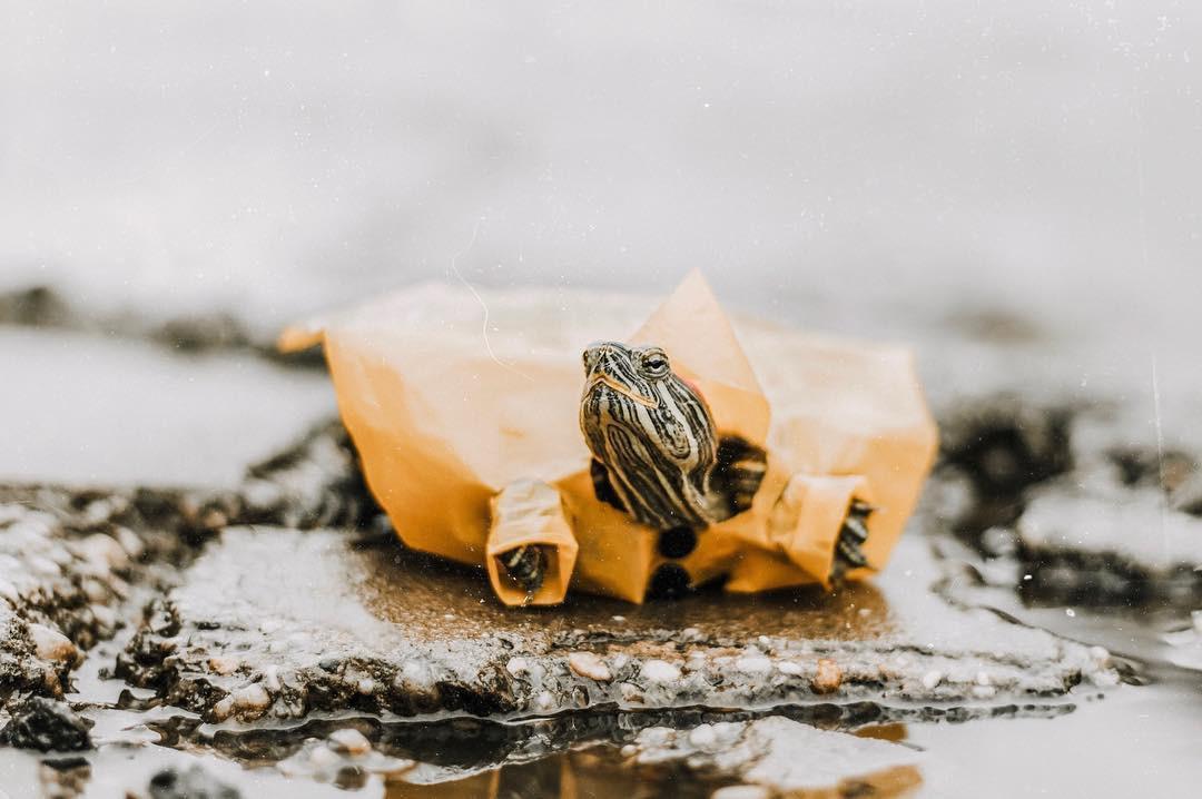 Cuộc sống sang chảnh của 2 chú rùa tai đỏ đang chiếm trọn trái tim người dùng Instagram - Ảnh 3.