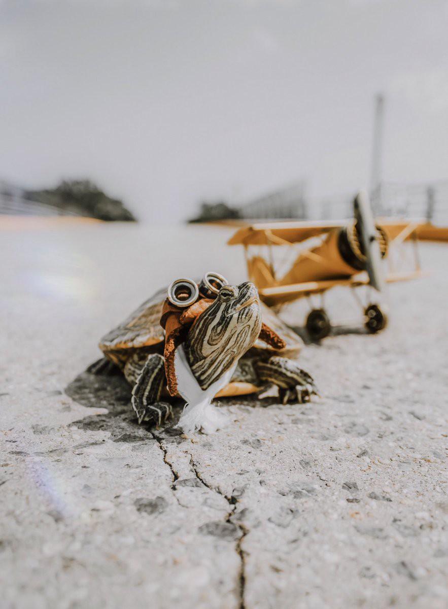 Cuộc sống sang chảnh của 2 chú rùa tai đỏ đang chiếm trọn trái tim người dùng Instagram - Ảnh 5.
