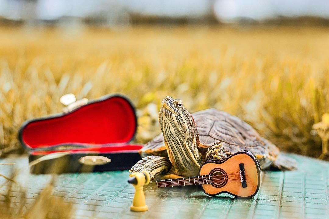 Cuộc sống sang chảnh của 2 chú rùa tai đỏ đang chiếm trọn trái tim người dùng Instagram - Ảnh 8.