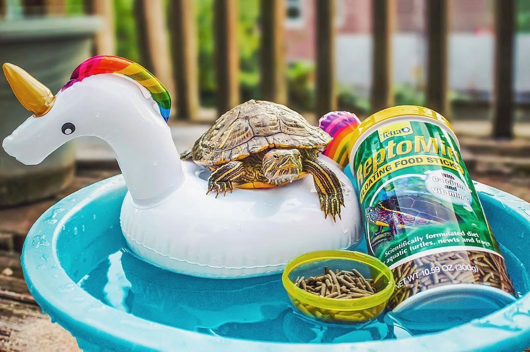 Cuộc sống sang chảnh của 2 chú rùa tai đỏ đang chiếm trọn trái tim người dùng Instagram - Ảnh 9.