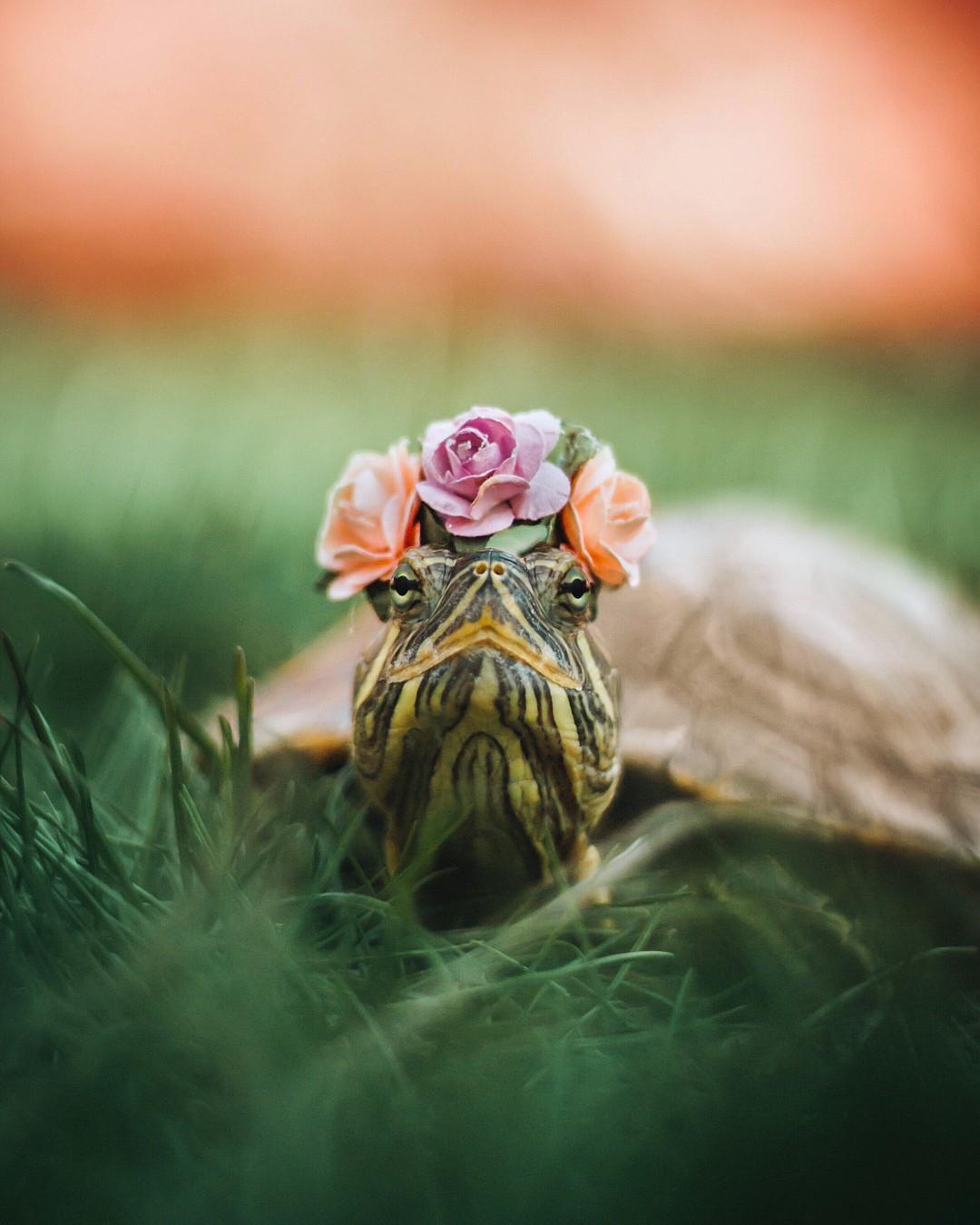 Cuộc sống sang chảnh của 2 chú rùa tai đỏ đang chiếm trọn trái tim người dùng Instagram - Ảnh 1.