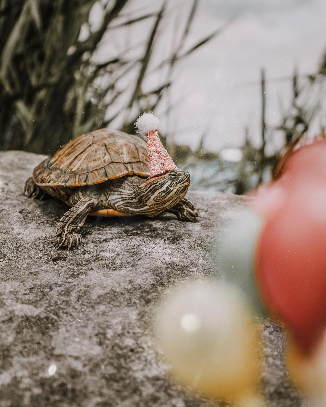 Cuộc sống sang chảnh của 2 chú rùa tai đỏ đang chiếm trọn trái tim người dùng Instagram - Ảnh 2.