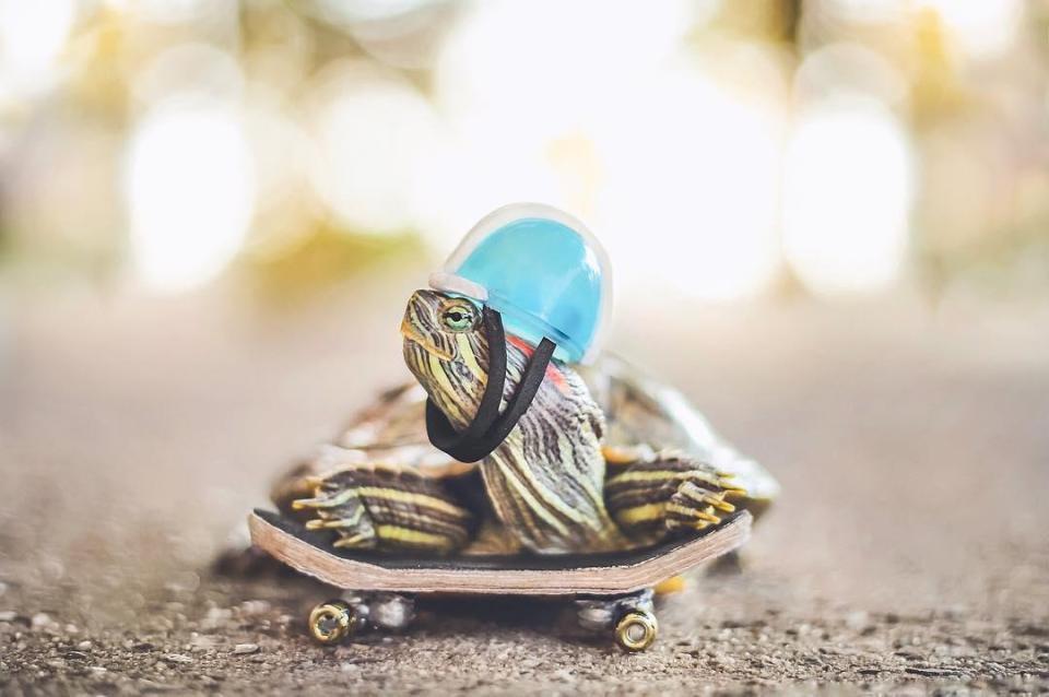 Cuộc sống sang chảnh của 2 chú rùa tai đỏ đang chiếm trọn trái tim người dùng Instagram - Ảnh 7.