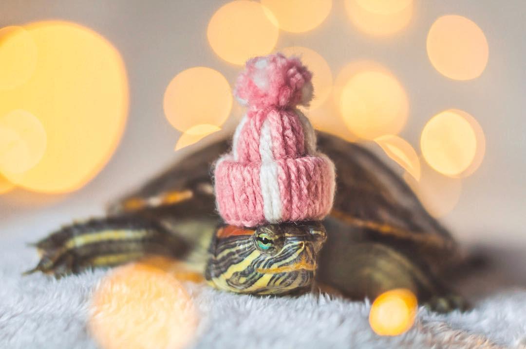 Cuộc sống sang chảnh của 2 chú rùa tai đỏ đang chiếm trọn trái tim người dùng Instagram - Ảnh 10.