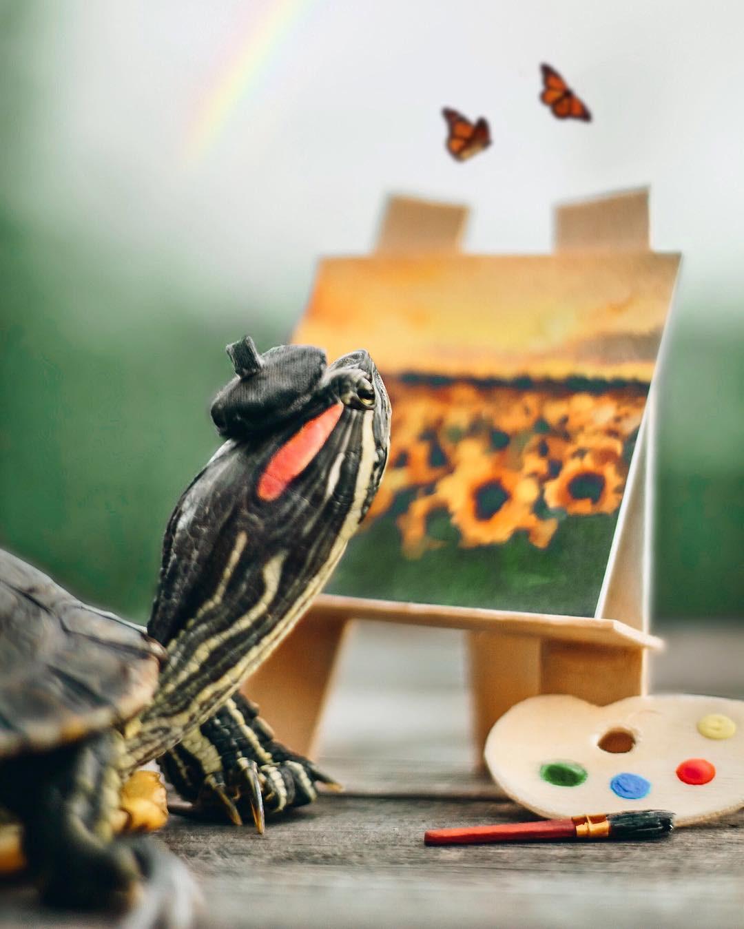 Cuộc sống sang chảnh của 2 chú rùa tai đỏ đang chiếm trọn trái tim người dùng Instagram - Ảnh 12.