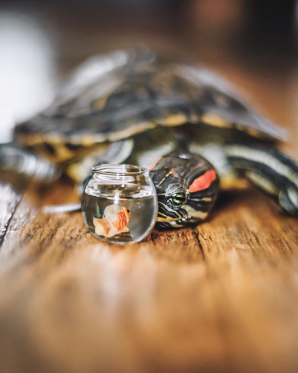 Cuộc sống sang chảnh của 2 chú rùa tai đỏ đang chiếm trọn trái tim người dùng Instagram - Ảnh 13.