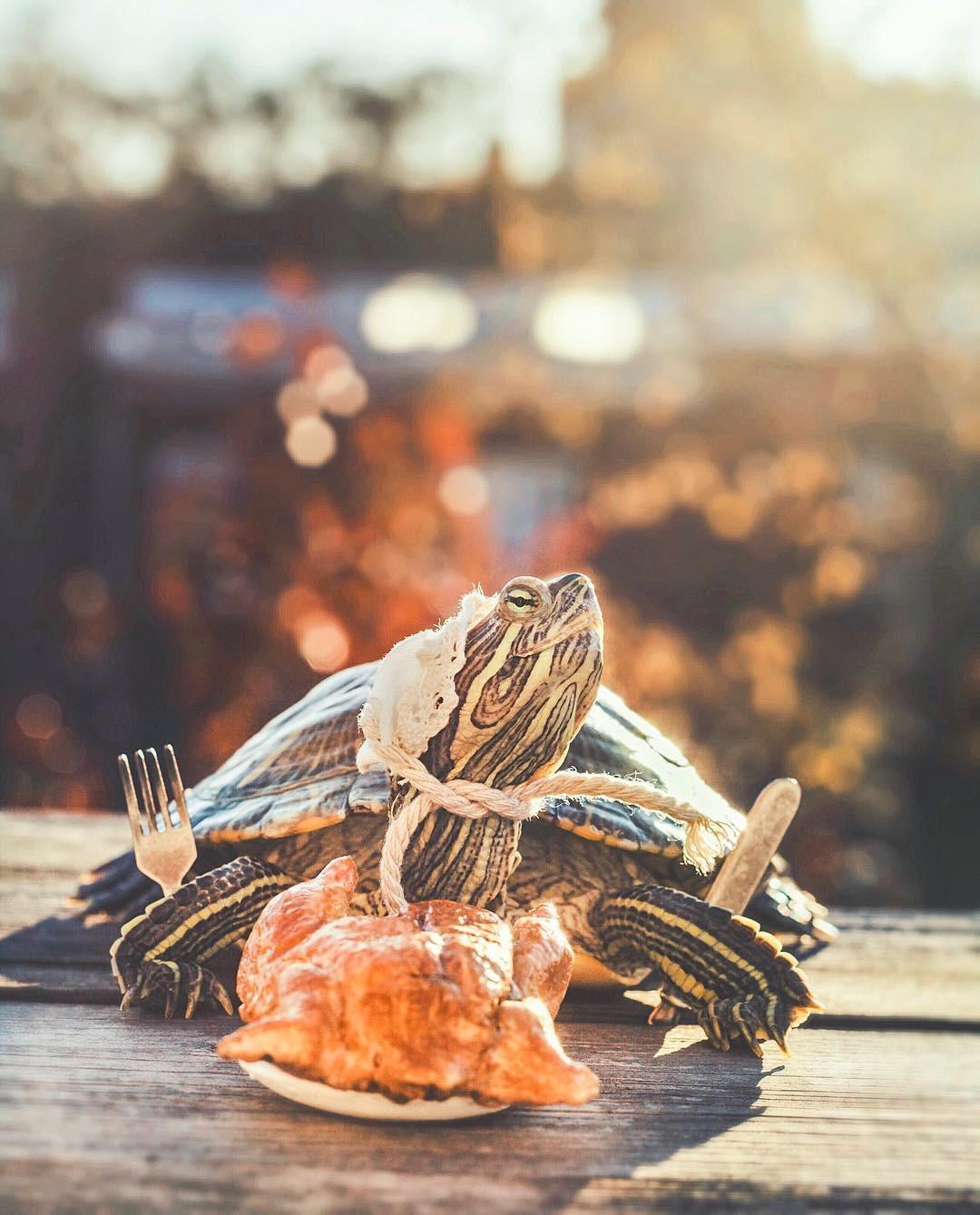Cuộc sống sang chảnh của 2 chú rùa tai đỏ đang chiếm trọn trái tim người dùng Instagram - Ảnh 15.