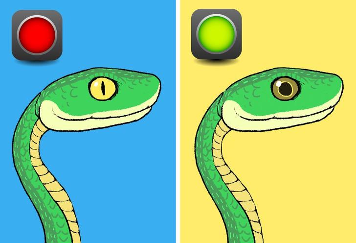 Trọn bộ bí kíp phân biệt một con rắn có độc hay không - học ngay để bớt hoảng sợ khi rắn bò vào nhà - Ảnh 1.