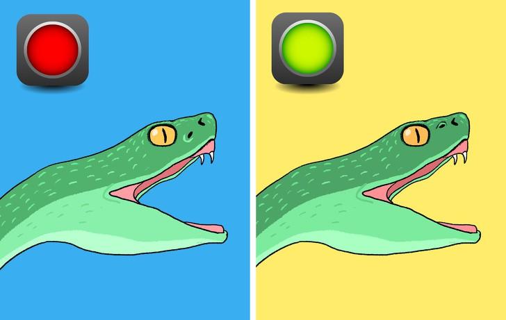 Trọn bộ bí kíp phân biệt một con rắn có độc hay không - học ngay để bớt hoảng sợ khi rắn bò vào nhà - Ảnh 2.