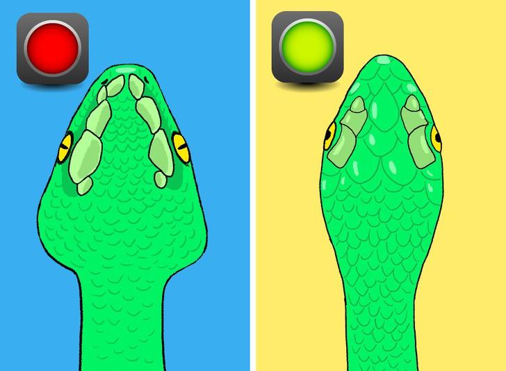 Trọn bộ bí kíp phân biệt một con rắn có độc hay không - học ngay để bớt hoảng sợ khi rắn bò vào nhà - Ảnh 3.