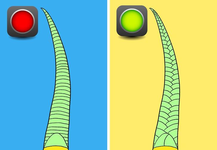 Trọn bộ bí kíp phân biệt một con rắn có độc hay không - học ngay để bớt hoảng sợ khi rắn bò vào nhà - Ảnh 4.