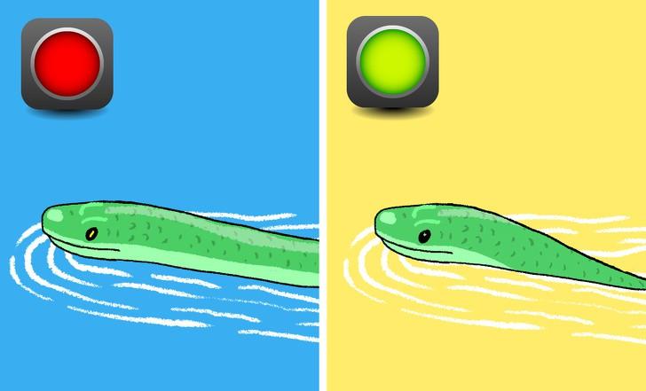 Trọn bộ bí kíp phân biệt một con rắn có độc hay không - học ngay để bớt hoảng sợ khi rắn bò vào nhà - Ảnh 5.