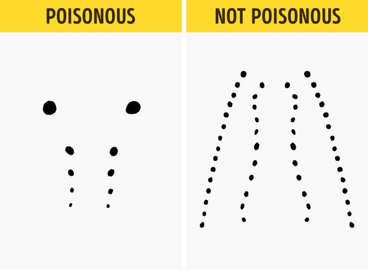 Trọn bộ bí kíp phân biệt một con rắn có độc hay không - học ngay để bớt hoảng sợ khi rắn bò vào nhà - Ảnh 6.