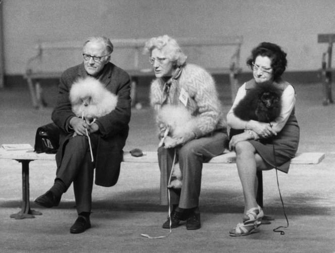 Những bức ảnh đen trắng hiếm có về Dog Show ở Anh giữa thế kỷ 20 - Ảnh 2.